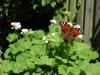 blomst3